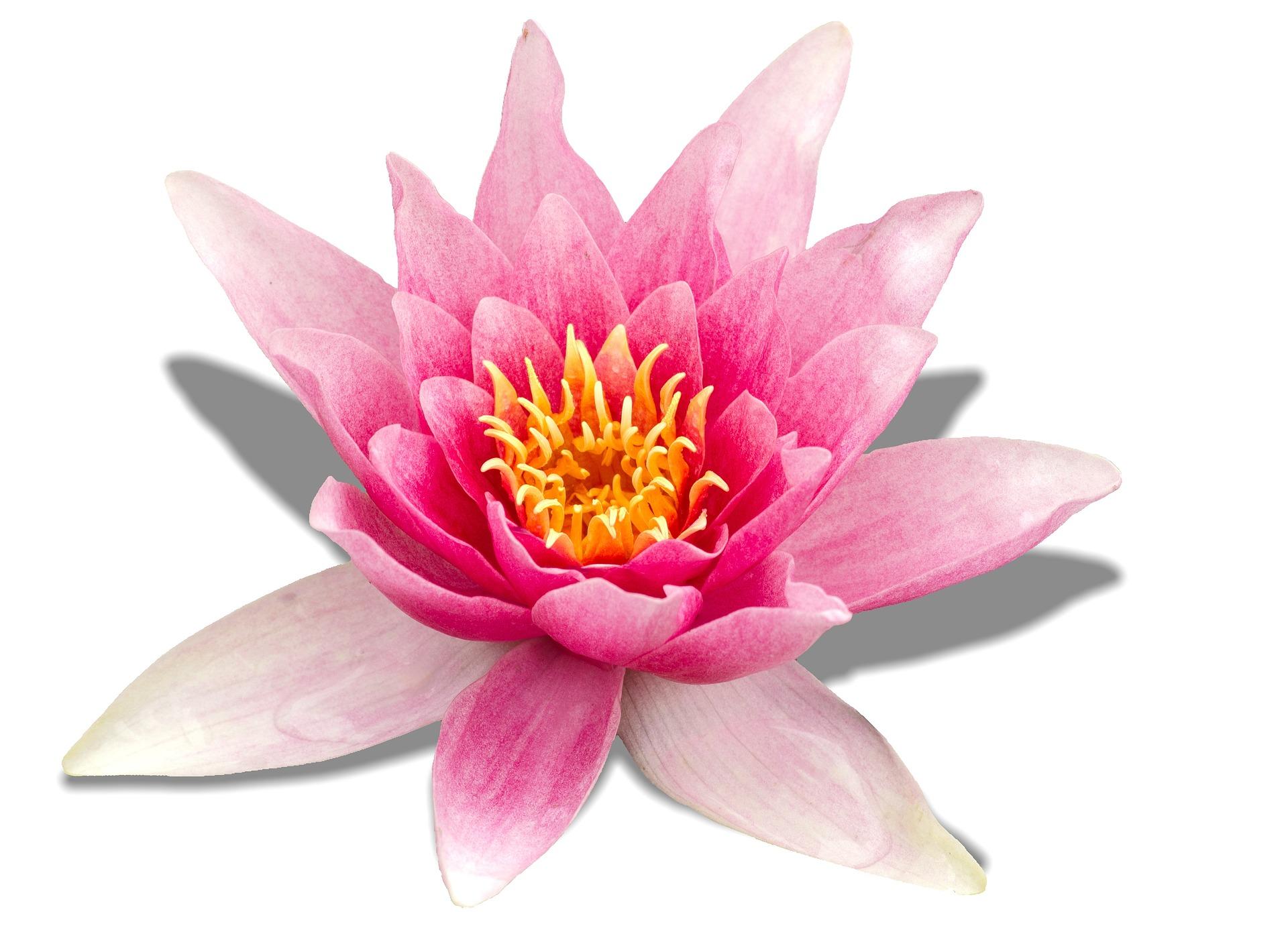 연꽃그림 리얼리티