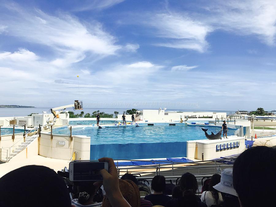 오키나와, 일본, 일본 여행, 여행, 오키나와 여행, 오키나와 츄라우미 수족관, 츄라우미, 수족관, 아쿠아리움, 고래 상어, 돌고래, 돌고래 쇼, Okinawa, Churaumi, Aquarium, CCAMI, 까미, Churaumi Aquarium, 오키나와 맵코드, 오키나와 렌트카, 렌트카, 오키짱 극장, 오키나와 관광