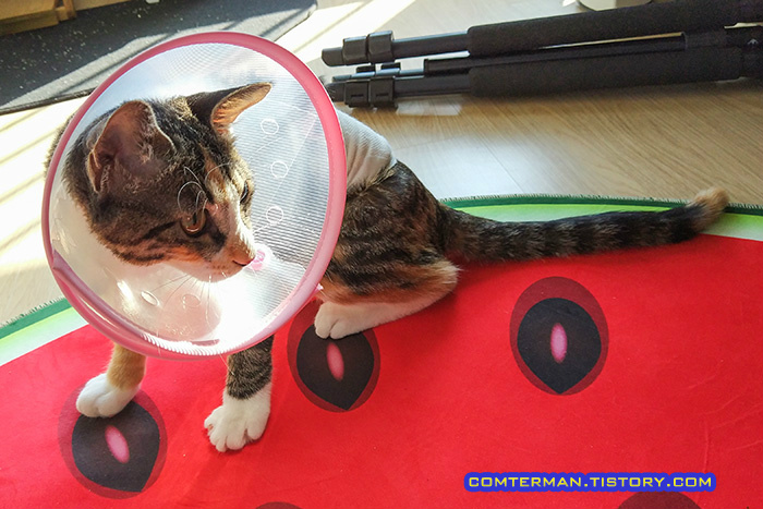 고양이 넥카라 거부감