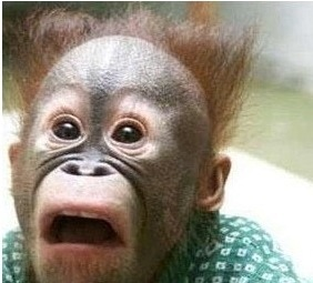 깜놀 짤 원숭이