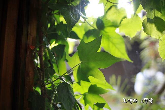 교토 클램프 커피 사라사~ 숲속같은 분위기13