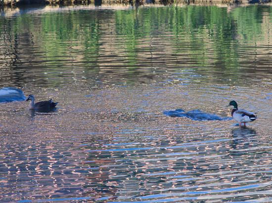 올림푸스 E-P3에 올림푸스 E-P3에 올림푸스 주이코 오토 200mm f4 렌즈로 찍은 예제 사진