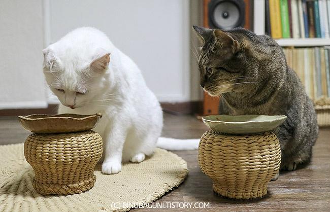 밥 먹는 고양이 형제