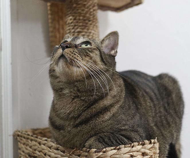 멍하니 천장을 올려다보는 고양이