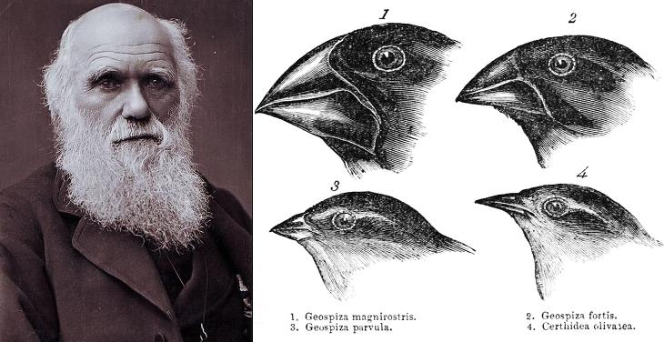 다윈, 진화론
