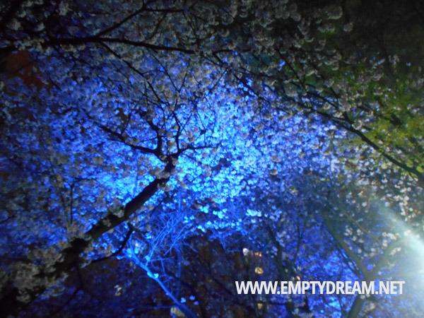 중랑천 장안벚꽃길 만개한 벚꽃 밤에도 꽃놀이