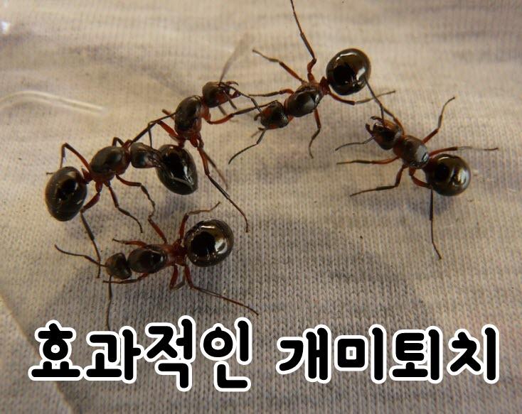 쇼파위에 있는 개미들