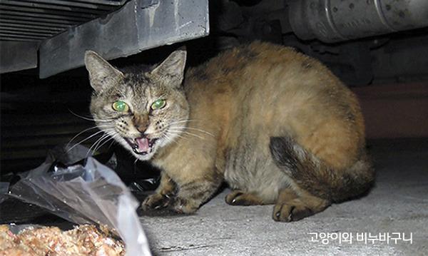 길고양이 순덕이. 내가 주는 밥을 먹으면서도 한 발짝만 가까워지면 하악질을 발사하곤 했다