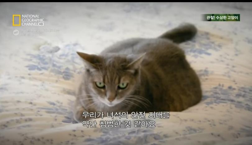 고양이키우기3