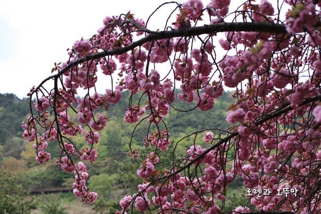4월의 남해대교, 노량공원 튤립 나들이7