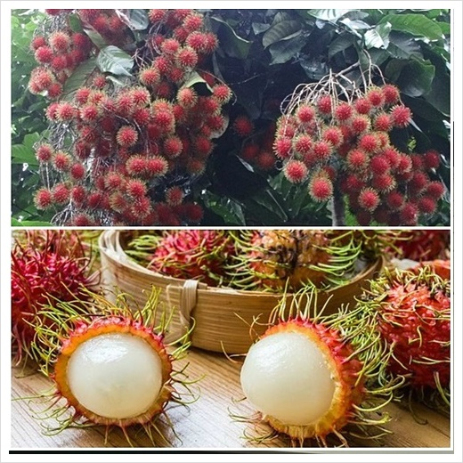 동남아 과일