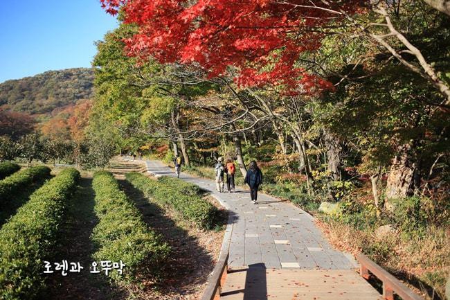 전라도 고창 '선운사'의 11월 단풍여행(주차정보, 입장료)27