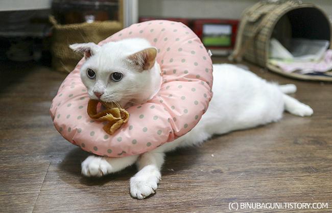 간식을 입에 문 고양이