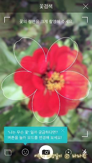 사진찍어 꽃이름 아는 방법