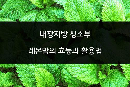 내장지방 청소부~ 레몬밤의 효능과 부작용 [레몬밤차 활용법]