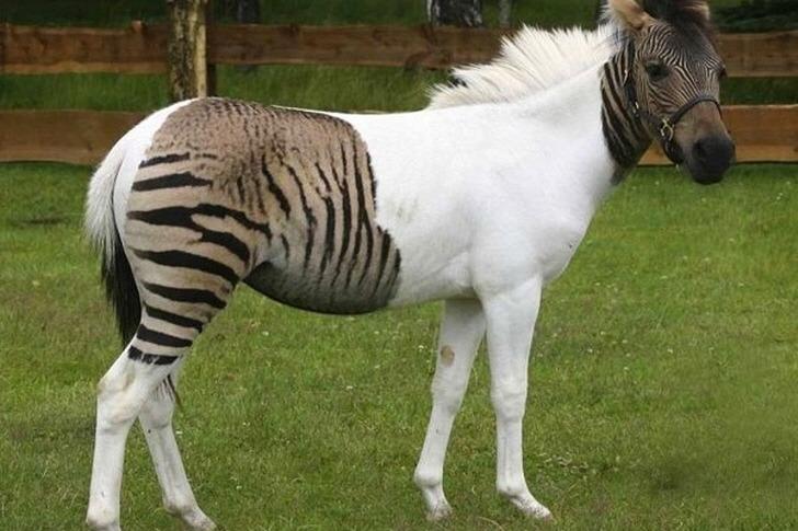 인간의 호기심 때문에 탄생한 동물들