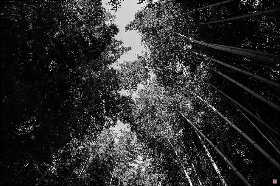 [삼성NX500] 竹林
