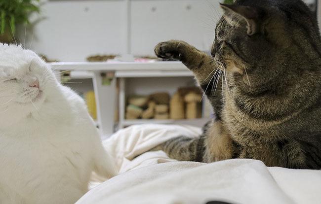 싸우는 고양이 형제