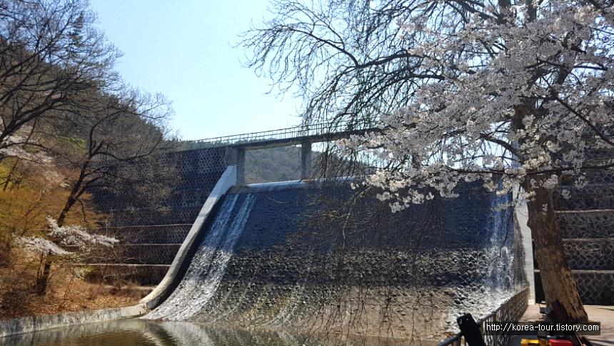 [대전여행-식장산 세천유원지]맘스터치 햄버거~ 벗꽃구경