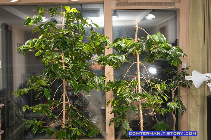 필립스 식물 LED 램프 커피나무