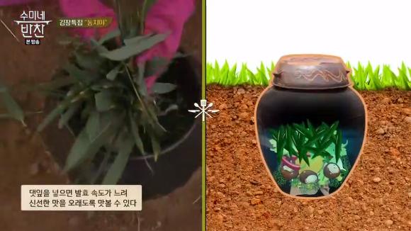 김수미 동치미 황금레시피