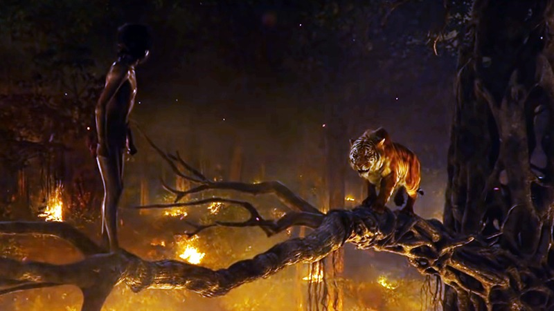 사진: 호랑이 쉬어칸과 모글리의 대결