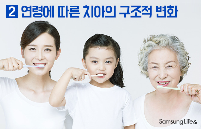연령에 따른 치아의 구조적 변화