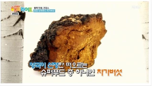 차가버섯효능 <20>