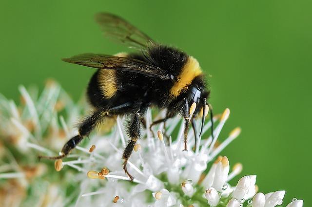꿀 VS 로열젤리 VS 프로폴리스 VS 비폴렌의 효능과 차이점, 부작용ㅣ 주의사항 ㅣ 공통점