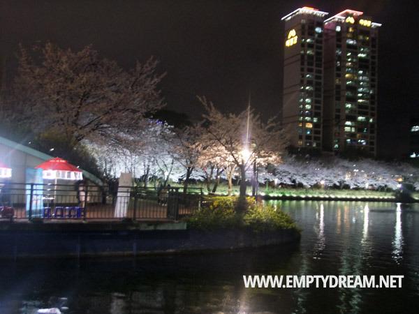 잠실 석촌호수 야간 벚꽃놀이, 꽃놀이 사랑놀이 모두가 순간이라