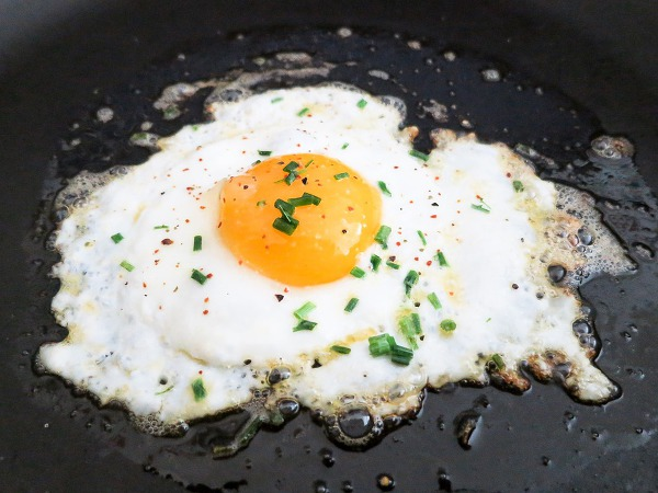 egg 달걀 계란 암탉 병아리
