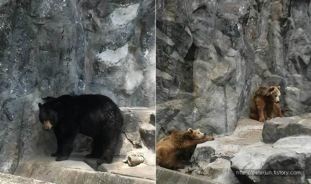 동물원 곰 사진