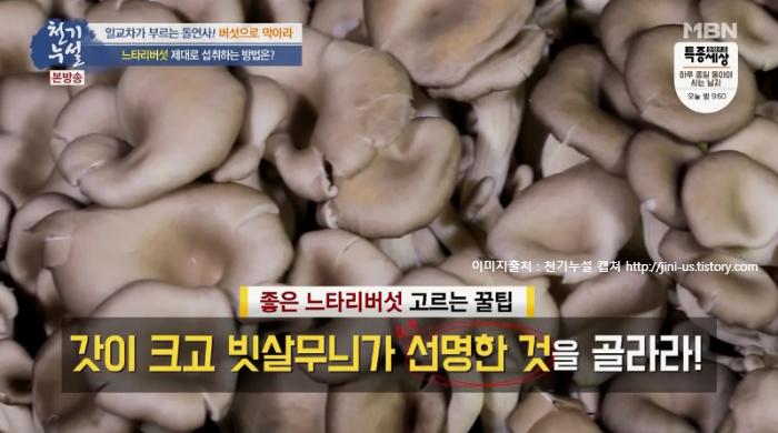 천기누설 돌연사예방에 탁월한 노랑느타리버섯 효능과 섭취시 주의사항, 먹는방법(노랑느타리버섯볶음,노랑느타리버섯순두부찌개 레시피) 382회 일교차가 부르는 돌연사! 버섯으로 막아라6