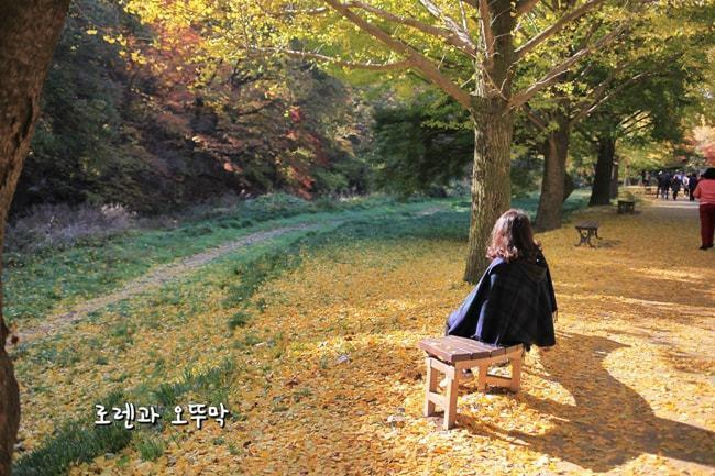 전라도 고창 '선운사'의 11월 단풍여행(주차정보, 입장료)31