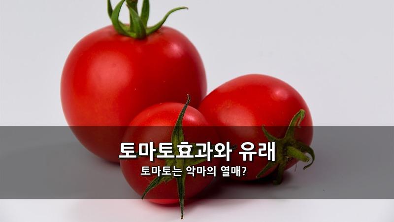 토마토는 악마의 열매? - 토마토효과와 유래