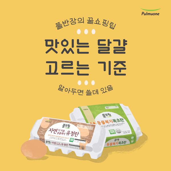 [카드뉴스] 풀반장의 꿀쇼핑팁 : 맛있는 달걀 고르는 법!