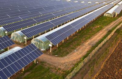 영농형 태양광 발전(솔라 쉐어)의 장,단점에 대해서