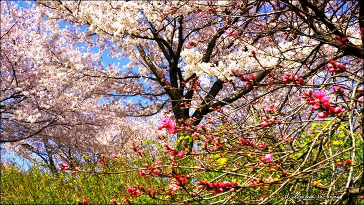 구포뚝 꽃대궐