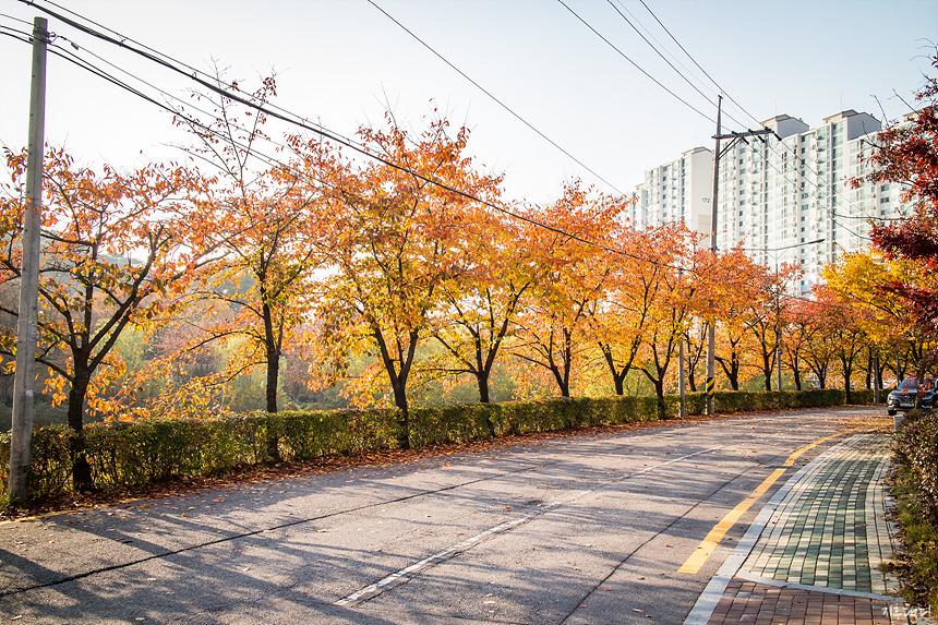 수원성감리교회 앞 단풍길