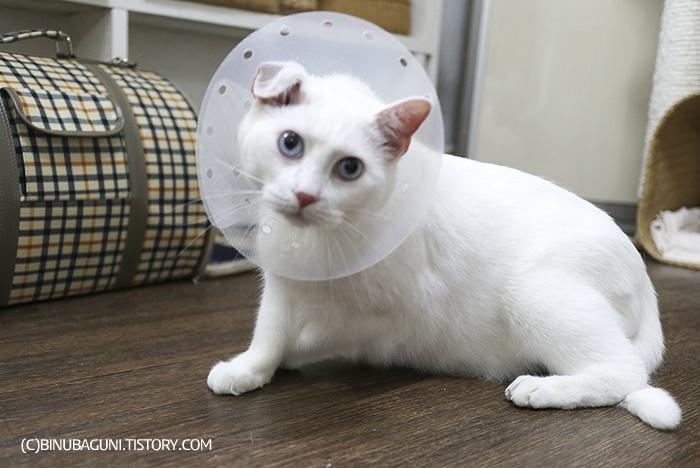 병원에서 막 돌아온 가여운 내 고양이