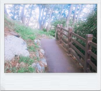 산책길 이미지 1112