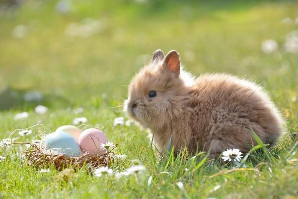 토끼 동물 rabbit 몸집이 큰 토끼 hare