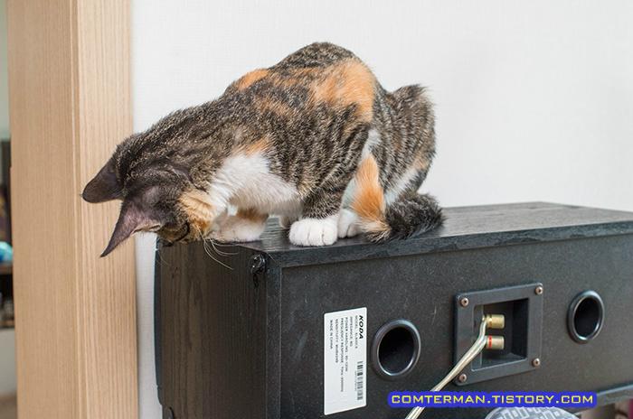 고양이 물어뜯는 버릇
