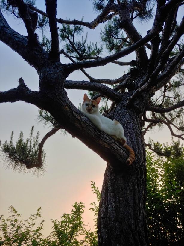 나무위의 고양이