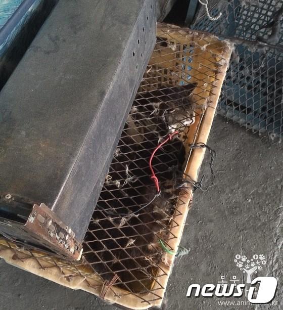 속칭 '나비탕' 재료로 넘겨진 길고양이들.(사진 동물자유연대 제공)© News1