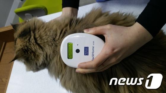 반려동물 등록은 동물보호관리시스템(www.animal.go.kr) 상의 동물 등록정보를 통해 소유자를 쉽게 찾을 수 있어 유기동물 발생을 방지하는데 큰 도움이 된다.© News1