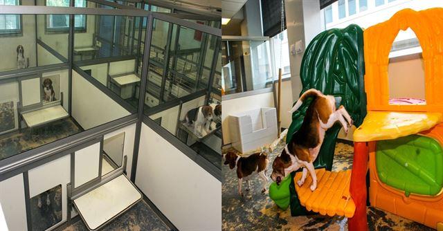 영국에 실험동물이 지내는 환경을 개선하기 위해 설치된 가정집 같은 구조의 '홈-펜'(왼쪽)과 놀이터 시설. 사이언스다이렉트 홈페이지