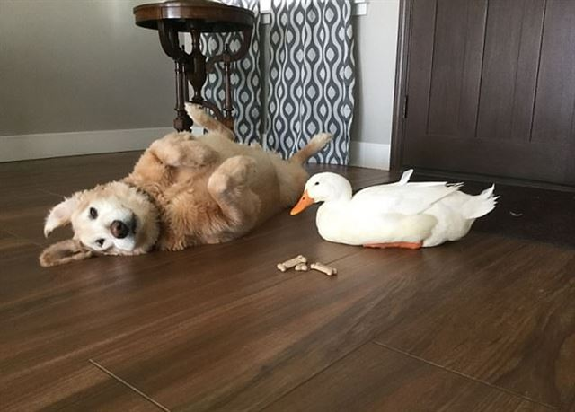 바클레이와 루디는 놀거나 간식을 먹을 때, 낮잠을 잘 때도 늘 함께다. 보어드판다 홈페이지