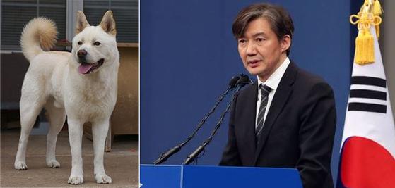 조국은 진돗개 관상이다. 충성심 강하고 의리 있는 백구(白狗)에 해당한다.