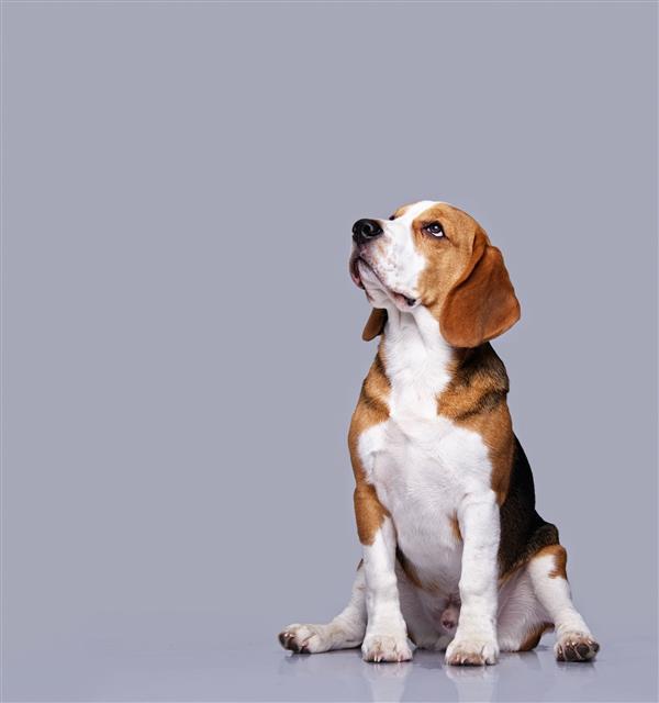 1인 가구 증가와 함께 반려동물을 가족으로 삼는 펫팸족이 증가하는 가운데, 반려동물을 둘러싼 법적 공방이 끊이지 않고 있다.출처 123rf